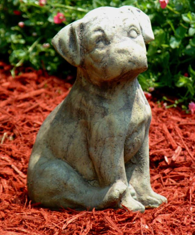 81002 Bull Dog Pup