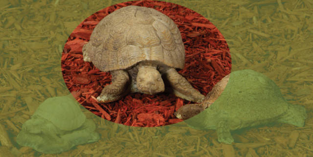 82000 C Large Crawling Turtle