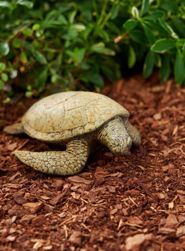 82006 Loggerhead Sea Turtle