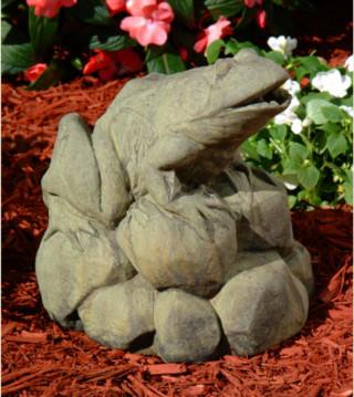 82503 Frog on Rock