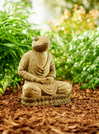 82519 Meditator Frog